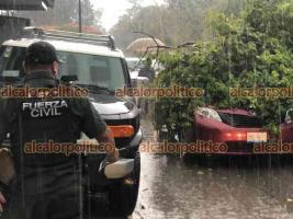 Xalapa, Ver., 12 de mayo de 2021.- Un árbol cayó sobre una camioneta en Paseo de las Palmas, casi esquina Paseo de Los Alpes, en Las Ánimas. Fuerza Civil ayudó a los ocupantes; no hubo lesionados.