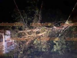Coatepec, Ver., 12 de mayo de 2021.- La dirección de PC reporta la caída de un árbol en la colonia 16 de Septiembre, a la altura de los Juzgados, la cual afectó los cables de CFE por lo que en esa zona no hay energía eléctrica.