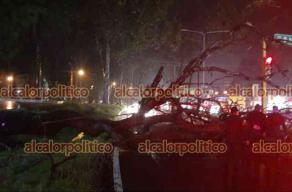 Xalapa, Ver., 12 de mayo de 2021.- Atiende personal del Escuadrón Nacional de Recate, Bomberos y SSP caída de árbol sobre Lázaro Cárdenas, esquina con avenida Xalapa, no se reportan lesionados.