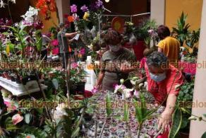 Xalapa, Ver., 17 de septiembre de 2021.- Desde este viernes y hasta el domingo, estará la Expo-Venta de Orquídeas, en el Casino Xalapeño. Participan expositores de varios de Estados. Destaca la exhibición de la Orquídea Negra, proveniente de Hawái.